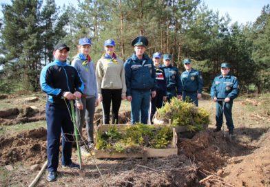Приумножая лесные богатства. Сотрудники Кореличского РОЧС совместно с активистами БМООСП приняли участие в акции «Неделя леса»