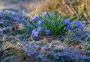 Кто не укрыл, тот потерял. Как защитить будущий урожай от весенних заморозков