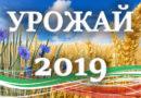 Уборка зерновых началась в Беларуси