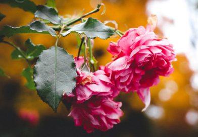 Газета «Полымя» объявляет о старте нового фотоконкурса «Настроение: золотая осень». За лучшие работы дарим подарки!