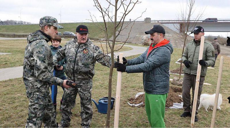 Александр Лукашенко в день субботника высаживает деревья на своей малой родине в Александрии