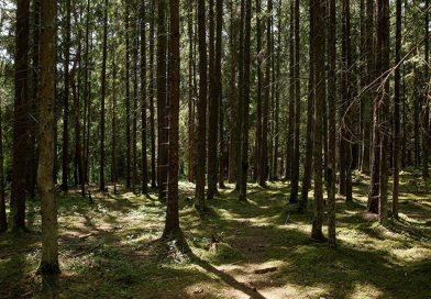 В Кореличском районе действует запрет на посещение лесов