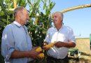 СПК «Маяк-Заполье» демонстрирует лучшую урожайность кукурузного силоса в районе