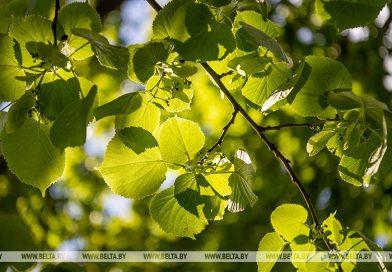 Парки семейных деревьев заложат в регионах Беларуси 28 октября