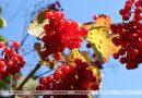 До +13°С ожидается в Беларуси 27 октября