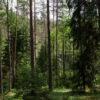 Кореличчина попала в список районов Гродненской области с запретом на посещение лесов с 25 апреля