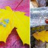 """Газета """"Полымя"""" объявляет о старте нового фотоконкурса «Настроение: золотая осень». За лучшие работы дарим подарки!"""